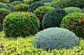 shrubs11